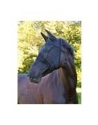 Mosqueros para caballos