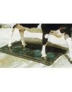 Pediluvios para vacas