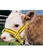 Cabezadas para vacas