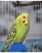 Productos y accesorios para el cuidado de pájaros