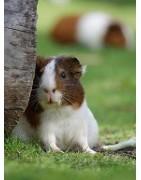 Productos y accesorios para el cuidado de roedores