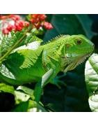 Productos y accesorios para el cuidado de reptiles