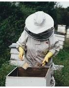 todo lo necesario para cuidar abejas
