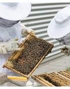 Equipación y útiles para el apicultor