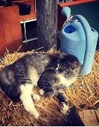 Productos y accesorios para el cuidado de gatos